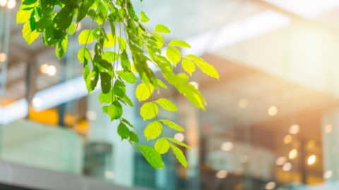 Sustainability focus should shift to built environment