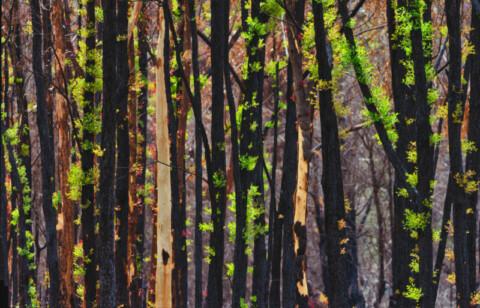 More funding drives smart, economic bushfire recovery