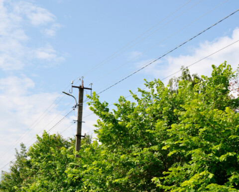 Energy Safe Victoria to push VIC council tree-clearance compliance