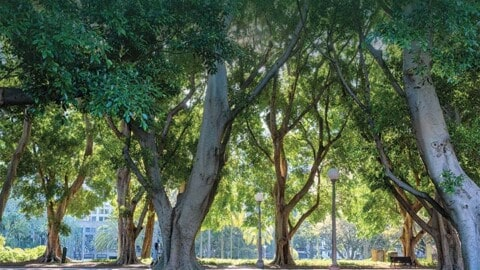 Green streets: why urban greening is vital to our cities