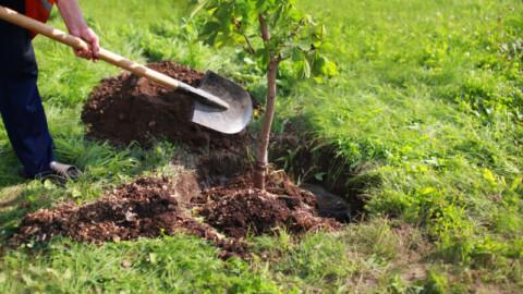 $5 million VIC greening initiative underway